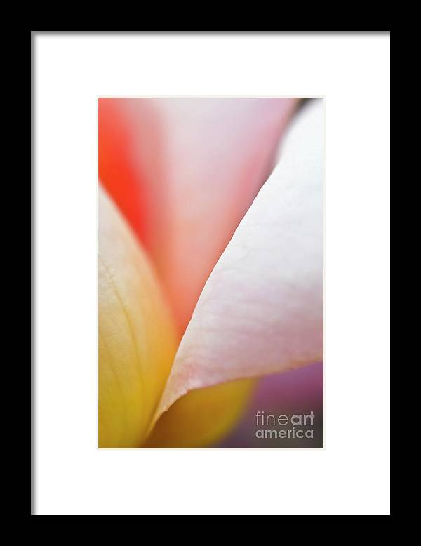 Rose Framed Print featuring the photograph Ornamental rose flower details by Heiko Koehrer-Wagner