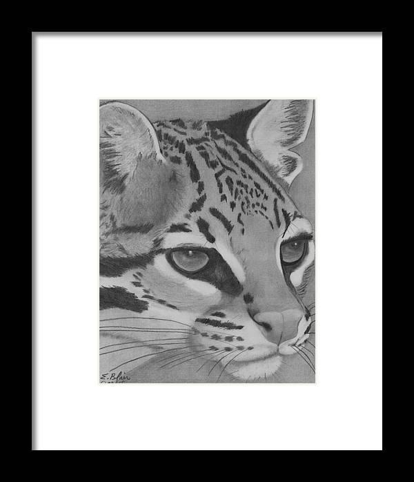 Wildlife Cat Oselot Drawing Blackandwhite Portrait Framed Print featuring the drawing Oselot by Eileen Blair