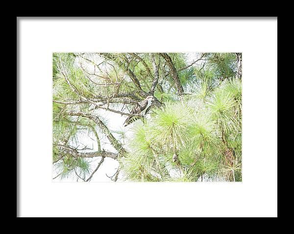 Osprey Applesauce Framed Print featuring the digital art Osprey Applesauce by William Tasker