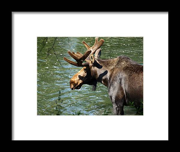 Wildlife Framed Print featuring the photograph Out For Lunch by DeeLon Merritt