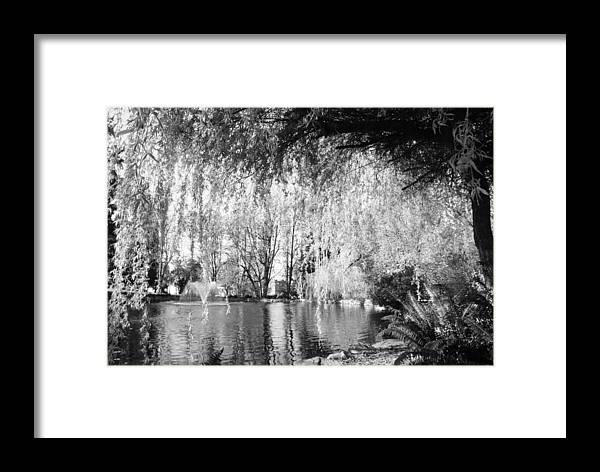 Pond Framed Print featuring the photograph Out From Under by David Coleman