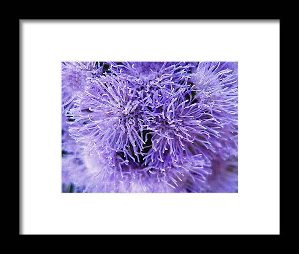 Floral Framed Print featuring the photograph Out of this World by Rhonda Barrett