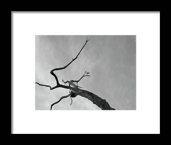 Birds Framed Print featuring the photograph Out On A Limb by Robert Meanor
