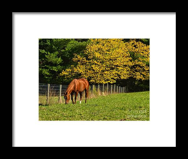 Horse Framed Print featuring the photograph Out To Pasture by Kathy Jennings