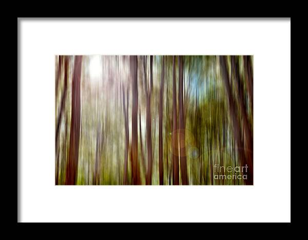 Boranup Forest Framed Print featuring the photograph Outnumbered by Az Jackson