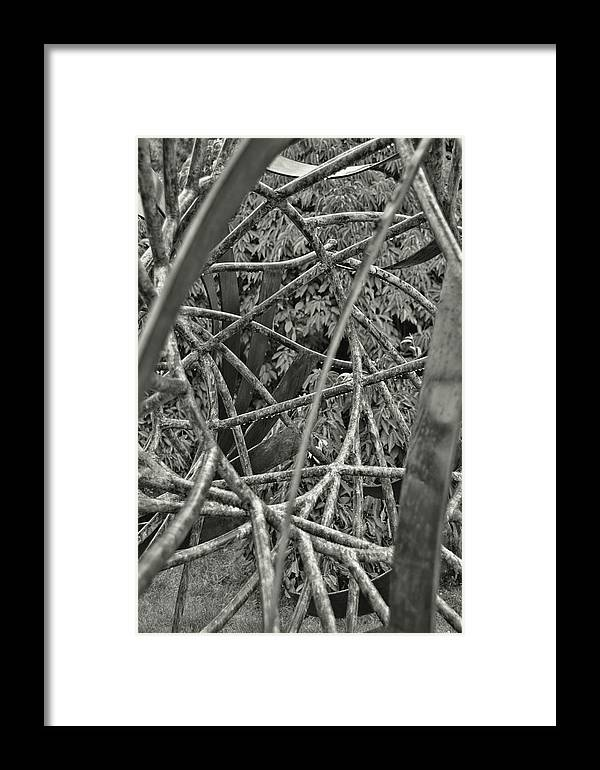 Groundsforscupture Framed Print featuring the photograph Overlapping by Jamart Photography