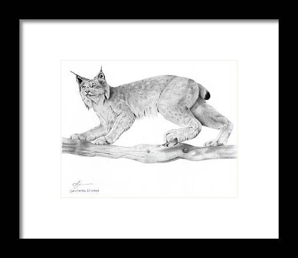 Lynx Framed Print featuring the drawing Overwatch by Christopher Bracken