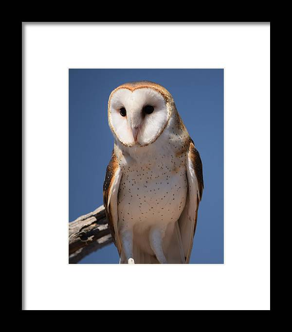 Owl Framed Print featuring the photograph owl by Diane Barone