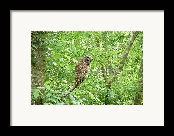 Owl Framed Print featuring the photograph Owl II by Kathy Schumann