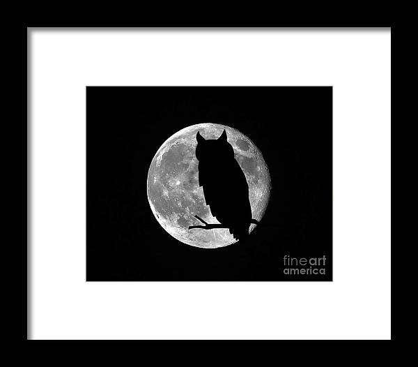 Owl Silhouette Framed Print featuring the photograph Owl Moon by Al Powell Photography USA