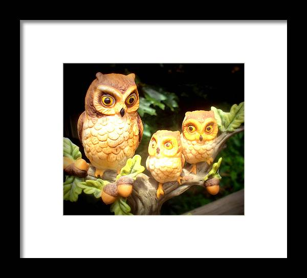 Owl Framed Print featuring the photograph Owl Trio by Jennifer Coleman