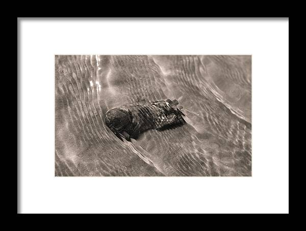 Oyster Shell Framed Print featuring the photograph Oyster Shell In Water by Dustin K Ryan