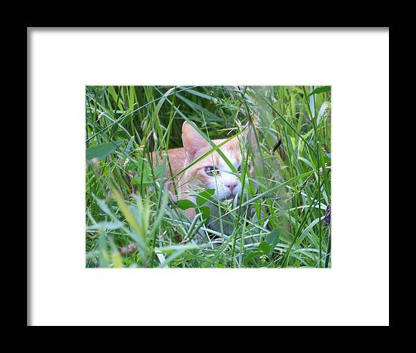 Cats Framed Print featuring the photograph Ozzy by Jessica Burgett
