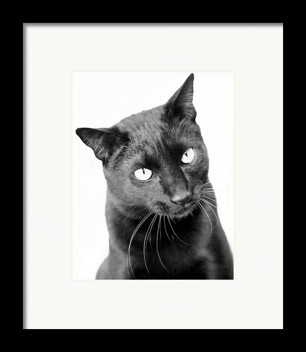 Cats Framed Print featuring the photograph Pablo by Heather S Huston