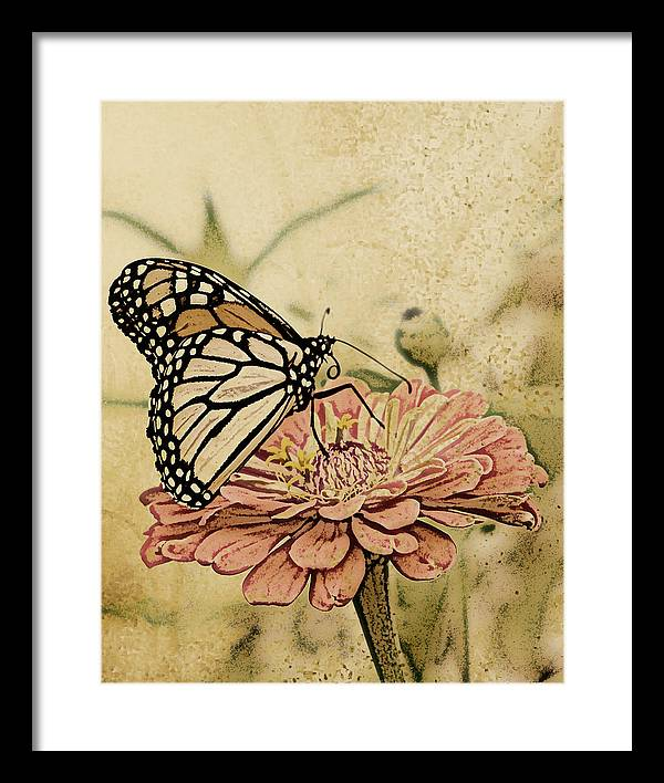 Butterfly Framed Print featuring the digital art Painted Beauty by Sally Engdahl
