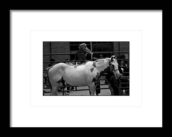 Horse Framed Print featuring the photograph Painted Horse by Filipe N Marques