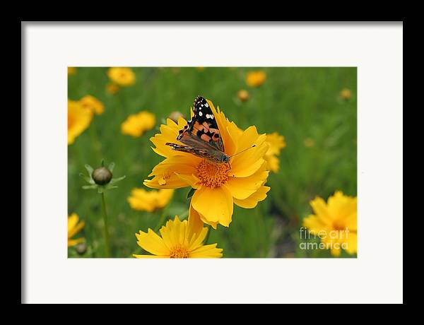 Painted Framed Print featuring the photograph Painted Lady Butterfly by Jeannie Burleson