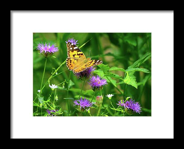 Painted Lady Framed Print featuring the photograph Painted Lady by Greg Norrell