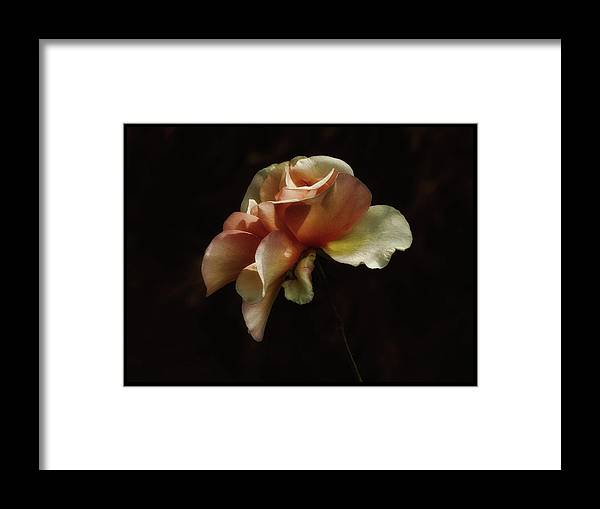 Roses Framed Print featuring the photograph Painted Roses by Elaine Malott