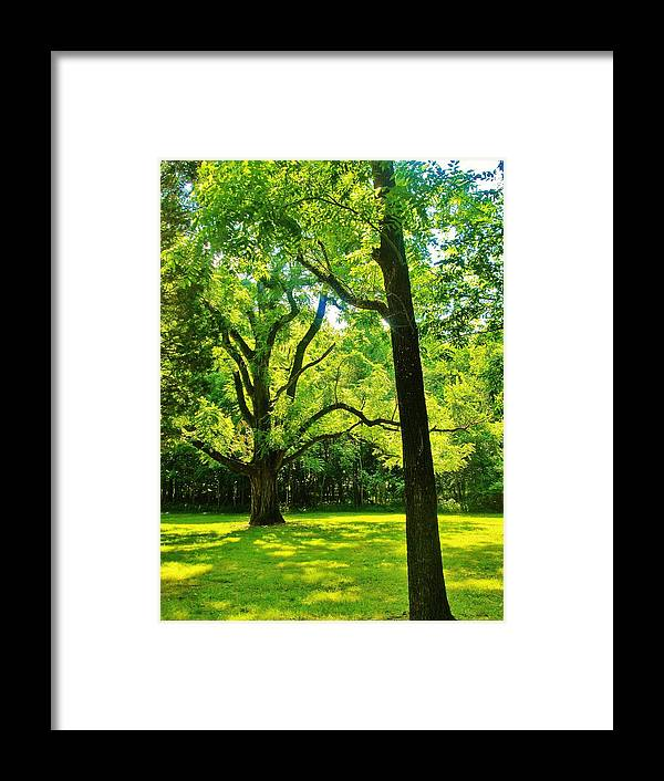 Tress Framed Print featuring the photograph Painting-like Photo Of A Rural Lawn by Michael Potts