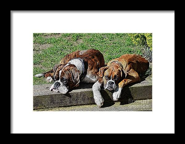 Boxers Framed Print featuring the photograph Pair Of Boxers by Chris Thaxter