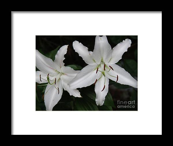 Lily Framed Print featuring the photograph Pair Of Flowering White Stargazer Lilies In Bloom by DejaVu Designs