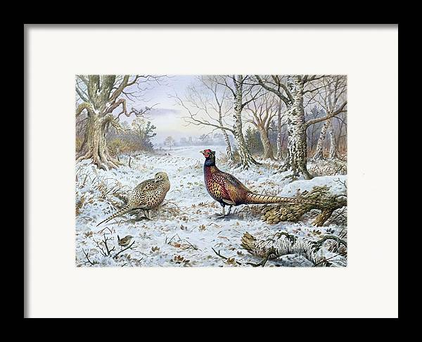 Game Bird; Snow; Woodland; Perdrix; Faisan; Troglodyte; Pheasant; Pheasants; Tree; Trees; Bird; Animals Framed Print featuring the painting Pair Of Pheasants With A Wren by Carl Donner
