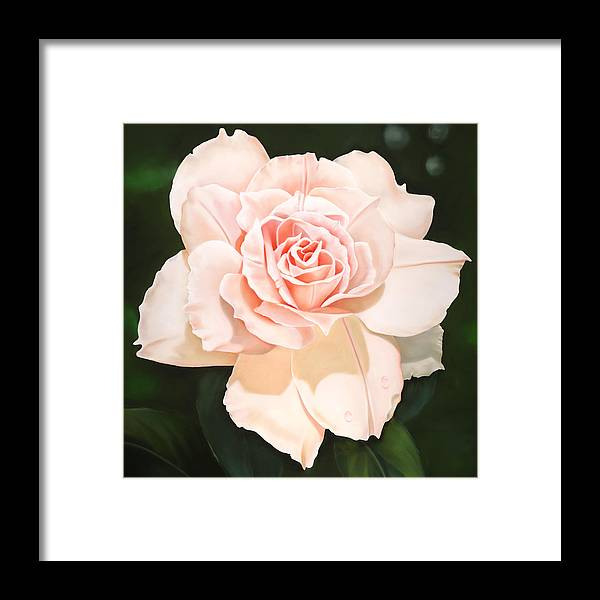 Flower Framed Print featuring the painting Pale Pink Rose by Ora Sorensen