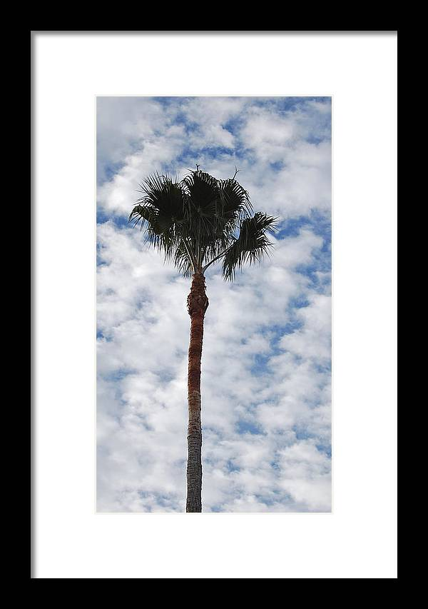Sky Framed Print featuring the photograph Palm And Clouds by Jean Booth