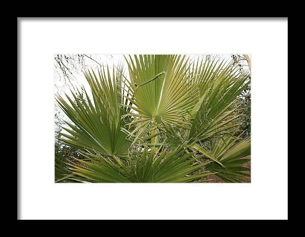 Bush Framed Print featuring the photograph Palm Bush by Joshua Sunday