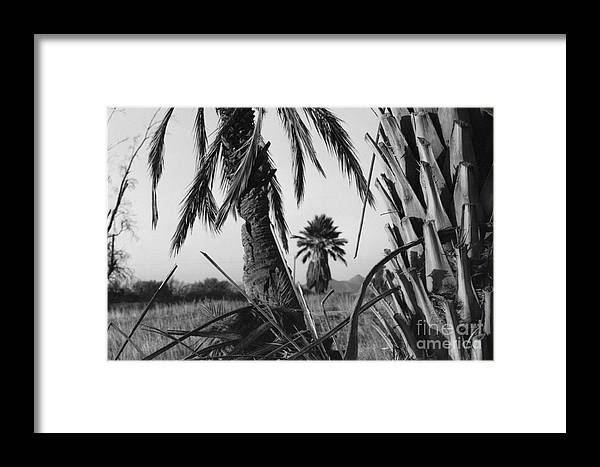 Black And White Photograpy Framed Print featuring the photograph Palm In View Bw Horizontal by Heather Kirk