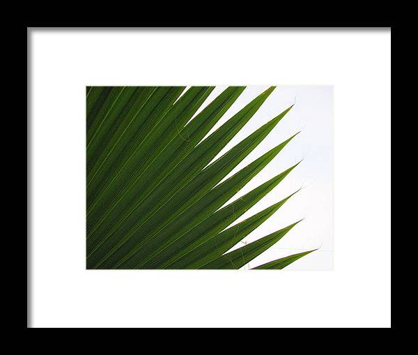 Palm Framed Print featuring the photograph Palm by Kathy Roncarati
