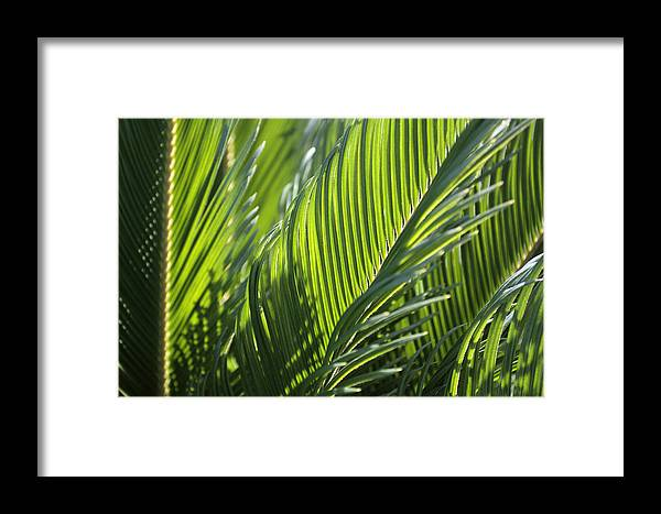 Palm Framed Print featuring the photograph Palm Leaf by Phil Crean