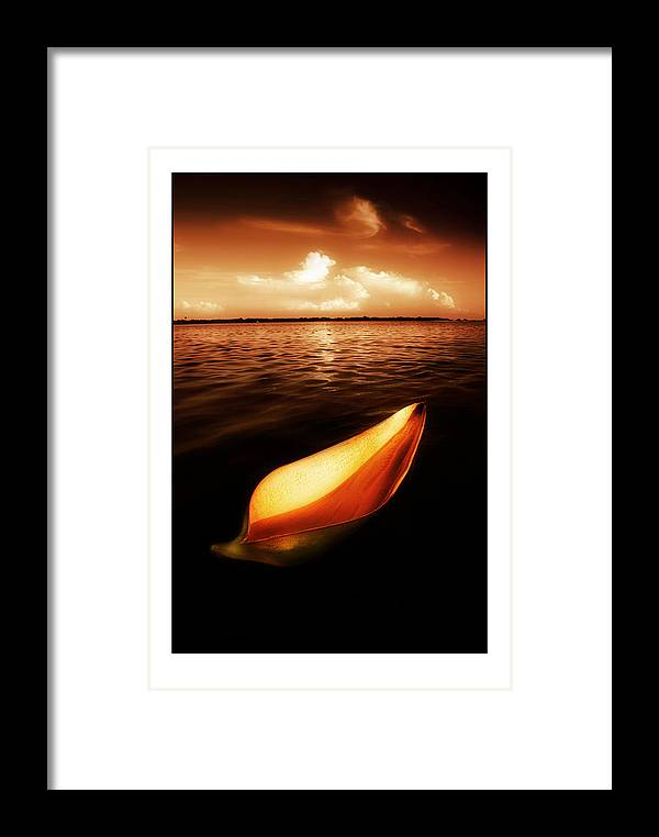 Palm Framed Print featuring the photograph Palm Leaf Sheath Boat by Mal Bray