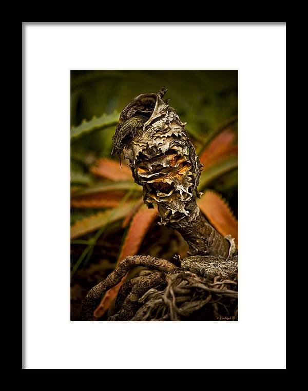 Flora Framed Print featuring the photograph Palm Root Kahuna by Daniel G Walczyk