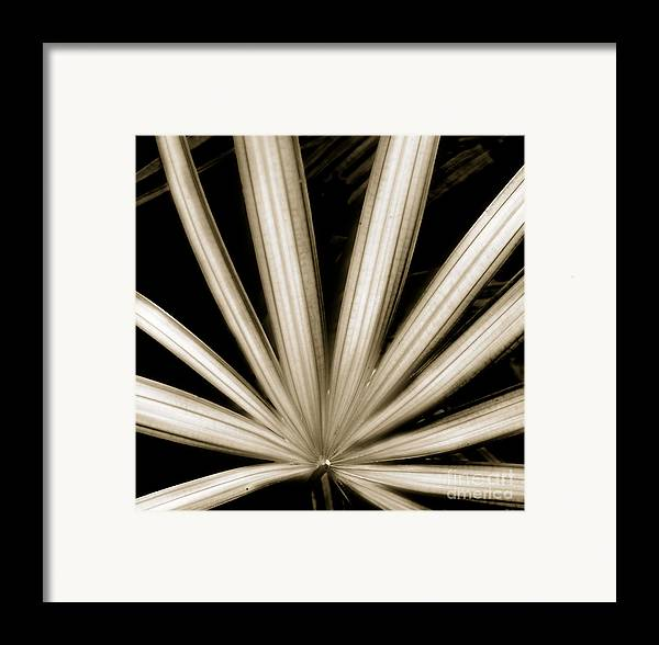 Beauty Flower Framed Print featuring the painting Palm by Son Of the Moon