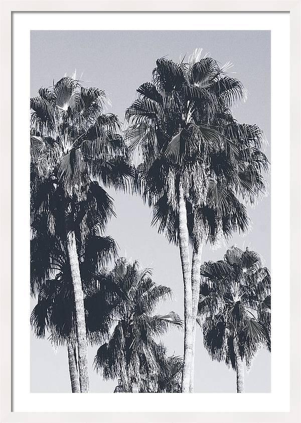 Palm Springs Palm Trees- Art by Linda Woods by Linda Woods