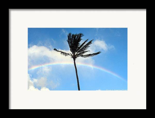Palm Tree Framed Print featuring the photograph Palm Tree In The Sky by Nicole I Hamilton