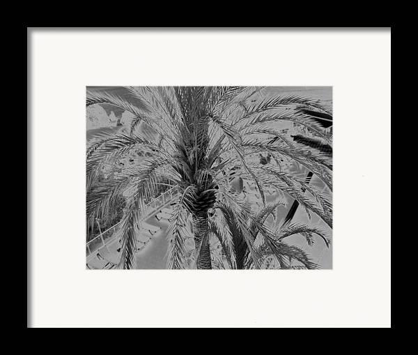 Palm Tree Spain Framed Print featuring the photograph Palm Tree by John Bradburn