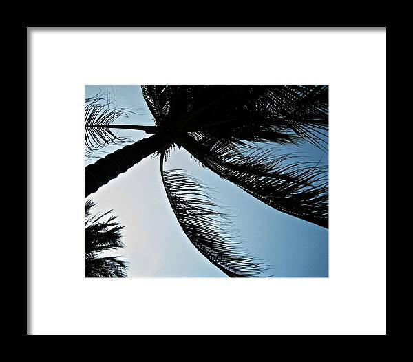 Plant Framed Print featuring the photograph Palm Tree Silhouette by Michele Stoehr