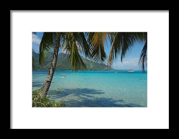 Moorea Framed Print featuring the photograph Palm Trees Cast A Shadow In Blue Water by Hibberd, Shannon
