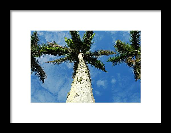 Botany Framed Print featuring the photograph Palm Trees by Mary Lane