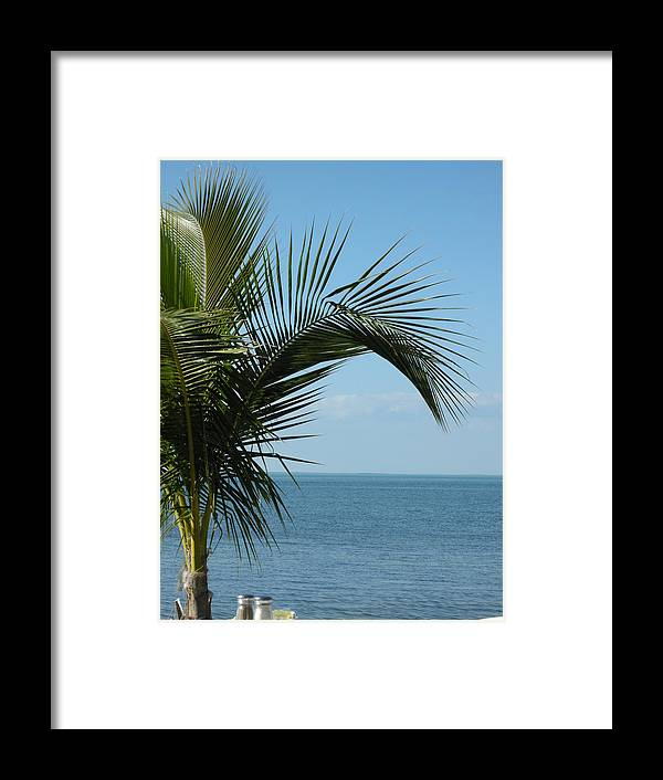 Tree Framed Print featuring the photograph Palm View by Audrey Venute