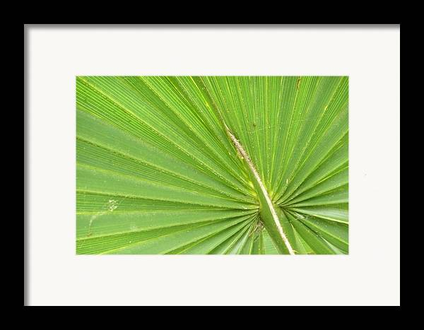 Palmetto Framed Print featuring the photograph Palmetto II by Kathy Schumann