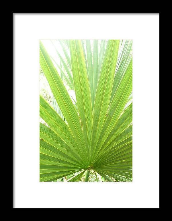 Green Framed Print featuring the photograph Palmetto by Kathy Schumann