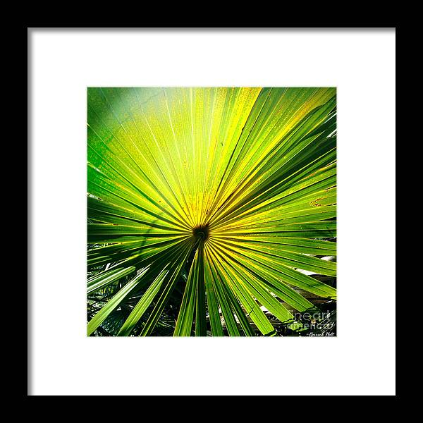 Palm Framed Print featuring the photograph Radial Palm by Korrine Holt