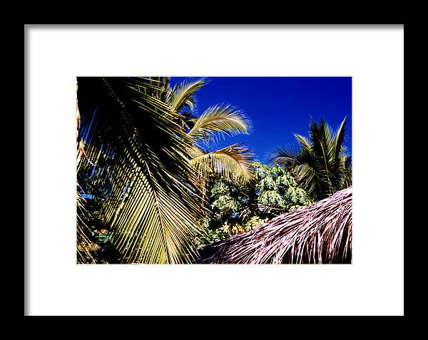 Palms Framed Print featuring the photograph Palms All Around 2 by Lyle Crump
