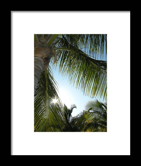 Palm Tree Framed Print featuring the photograph Palms by Audrey Venute