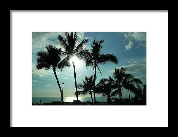 Palm Framed Print featuring the photograph Palms In Silhouette by Lori Seaman
