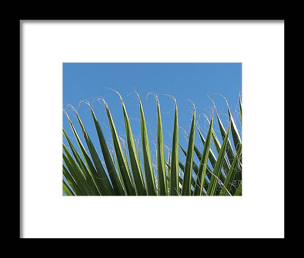 Palms Framed Print featuring the photograph Palms by Kathy Roncarati